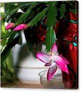 The Christmas Cactus Canvas Print