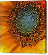 The Close Up Canvas Print