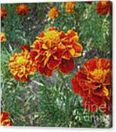 The Color Of Fire Canvas Print