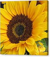 The Color Of Summer - Sunflower Canvas Print