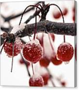 The Colors Of Winter Canvas Print