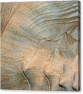 The Conch Canvas Print