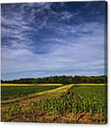 The Corn Fields Of Alabama Canvas Print