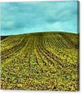 The Corn Rows Canvas Print