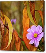 The Cosmos In The Peach Tree Canvas Print