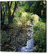 The Creek At Finch Arboretum 2 Canvas Print