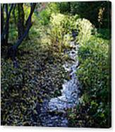 The Creek At Finch Arboretum Canvas Print