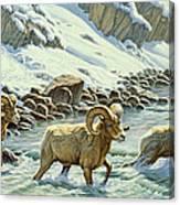 The Crossing - Bighorn Canvas Print
