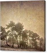 The Curved Tree Canvas Print