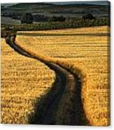 The Curved Way. Canvas Print