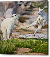 The Dance Of Joy Canvas Print