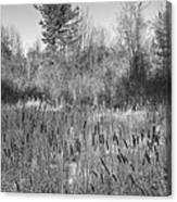 The Dance Of The Cattails Bw Canvas Print