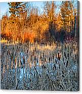 The Dance Of The Cattails Canvas Print