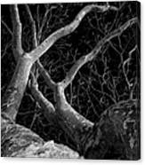 The Dark And The Tree 2 Canvas Print