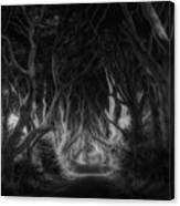 The Dark Hedges Canvas Print