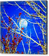 The Day The Moon Stayed Out All Day Canvas Print