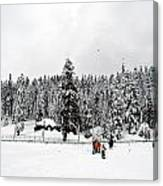 The Dazzle Of Winter Trees At Gulmarg - Kashmir- India- Viator's Agonism Canvas Print