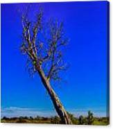 The Death Of  A Tree V5 Canvas Print