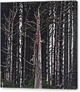 The Deep Dark Sharp Forest Canvas Print