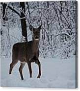The Deer In The Snow Canvas Print