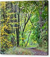 The Dense Forest Canvas Print