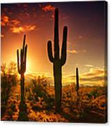 The Desert Awakens  Canvas Print