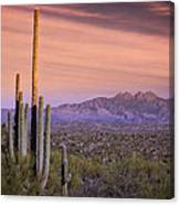 The Desert Beckons  Canvas Print