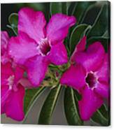 The Desert Rose  Canvas Print