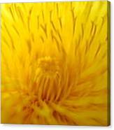 The Detail Is In The Dandelion Canvas Print