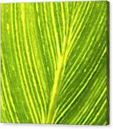 The Detail Of Plant Leaf, Salt Lake Canvas Print