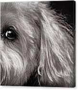 The Dog Next Door Canvas Print