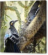 The Dove Vs. The Roadrunner Canvas Print