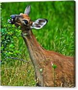 The Dreaded Deer Giraffe Canvas Print
