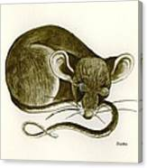 The Dreaming Mouse Canvas Print
