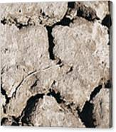The Drought Canvas Print
