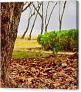The Dry Season Canvas Print