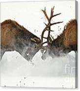 The Duel Of Fighting Elk Canvas Print