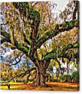 The Dueling Oak Painted Canvas Print