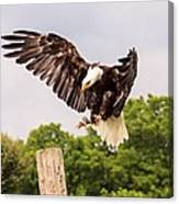 The Eagle Is Landing Canvas Print