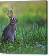 The Eastern Cottontail Canvas Print