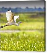 The Egret In Flight Series V3 Canvas Print