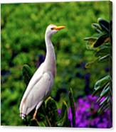 The Egret Outside My Window Canvas Print
