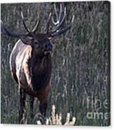 The Elegant Elk Canvas Print