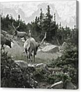 The Elk Painterly 2 Canvas Print