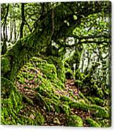 The Elven Forest No2 Wide Canvas Print