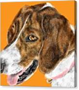 The English Pointer Foxhound Canvas Print