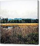Hamilton Marsh  Canvas Print