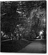 The Evening Foliage Tunnel Canvas Print