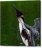 The Ever Elusive Loon Coming Out Of Dive Canvas Print