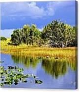 The Everglades Canvas Print